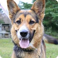Adopt A Pet :: Nadia - Livonia, MI