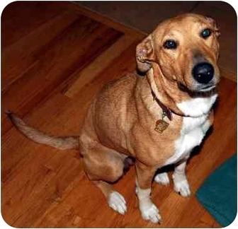 Collie Mix Dog for adoption in Overland Park, Kansas - Sabine