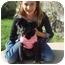 Photo 1 - Pekingese/Chihuahua Mix Dog for adoption in El Cajon, California - Chibi