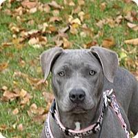 Adopt A Pet :: Emma - Hilliard, OH