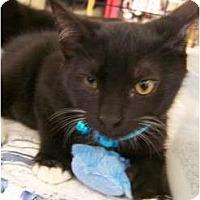 Adopt A Pet :: Rhys - Riverside, RI