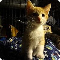 Adopt A Pet :: Toby - Saint Albans, WV