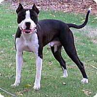 Adopt A Pet :: PHELPS - Phoenix, AZ