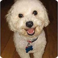Adopt A Pet :: Melinda - La Costa, CA