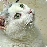 Adopt A Pet :: Hugo - Chicago, IL