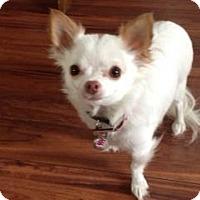 Adopt A Pet :: Hope - Saskatoon, SK
