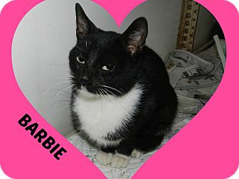 Domestic Shorthair Cat for adoption in Lawrenceburg, Tennessee - Barbie