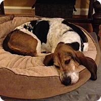 Adopt A Pet :: Ally May - Columbia, SC