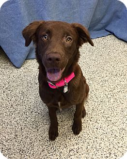 Spaniel (Unknown Type) Mix Dog for adoption in Chino Valley, Arizona - Dulce