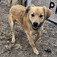 Adopt A Pet :: Mulder - Okmulgee, OK