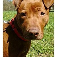 Adopt A Pet :: Athena - Bay City, MI