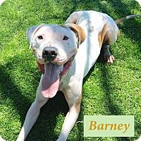 Adopt A Pet :: Barney - El Cajon, CA