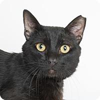 Adopt A Pet :: Romeo - Chico, CA