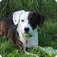 Adopt A Pet :: Immy - Grayslake, IL