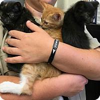 Adopt A Pet :: KIRBY - Houston, TX