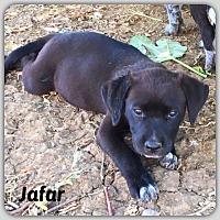 Adopt A Pet :: Jafar - DeForest, WI