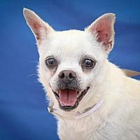Adopt A Pet :: BRODY - Pasadena, CA