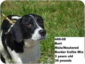 Border Collie Mix Dog for adoption in Zanesville, Ohio - Bert - RESCUED!