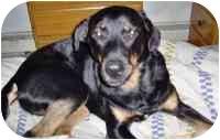 Rottweiler Dog for adoption in Warren, New Jersey - Matthew