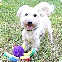 Adopt A Pet :: Dolce - Mocksville, NC