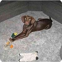 Adopt A Pet :: Clyde - Evansville, IN
