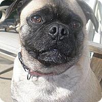 Adopt A Pet :: Ziggy - Hinckley, MN
