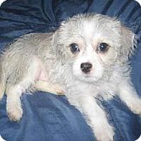 Adopt A Pet :: Wolfie - Chandler, AZ