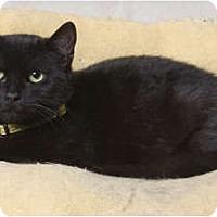 Adopt A Pet :: Noelle - Little Falls, NJ