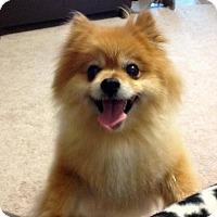 Adopt A Pet :: Luna - Santa Rosa, CA