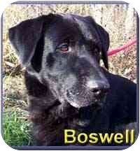 Labrador Retriever Mix Dog for adoption in Aldie, Virginia - Boswell