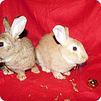 Adopt A Pet :: Diana - Elizabethtown, KY