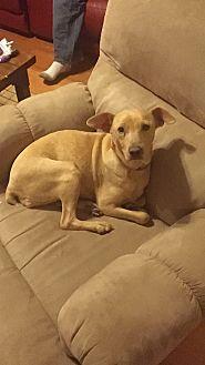 Miniature Pinscher Mix Dog for adoption in Hazard, Kentucky - Chessie