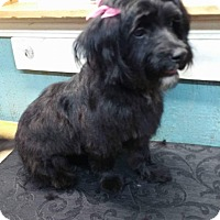 Adopt A Pet :: Darla - Crump, TN