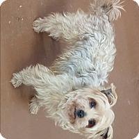 Adopt A Pet :: Gabby - Oberlin, OH