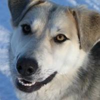 Adopt A Pet :: Bean (Marley) - Athabasca, AB
