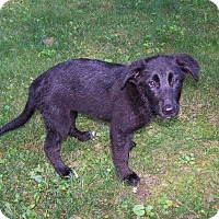 Adopt A Pet :: Claire - Rexford, NY