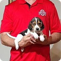 Adopt A Pet :: Walter - New Philadelphia, OH