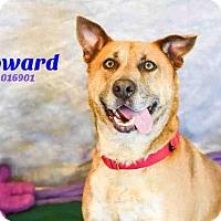 Adopt A Pet :: HOWARD - Aliquippa, PA