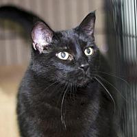 Adopt A Pet :: Tess - Sioux Falls, SD