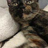 Adopt A Pet :: Irene - Fort Myers, FL