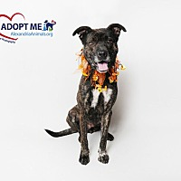 Adopt A Pet :: Brooklyn - Alexandria, VA