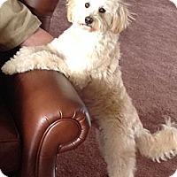 Adopt A Pet :: Rex - Victor, MT