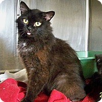 Adopt A Pet :: River - Dover, OH