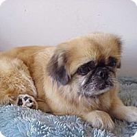 Adopt A Pet :: JOY JOY - Cathedral City, CA