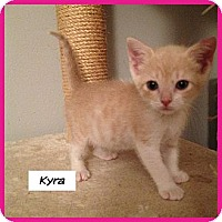 Adopt A Pet :: Kyra - Miami, FL