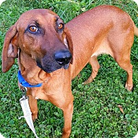 Adopt A Pet :: Peaches- URGENT - Providence, RI