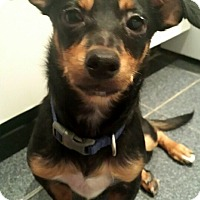 Adopt A Pet :: Gorgeous Gonzo - Brooklyn, NY