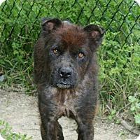 Adopt A Pet :: Scotty - Houston, TX