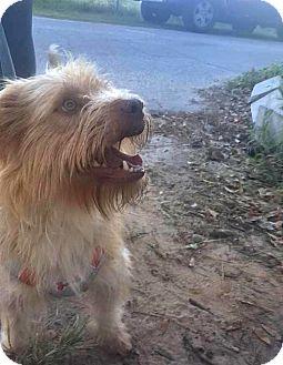 Terrier (Unknown Type, Small) Mix Dog for adoption in Savannah, Georgia - TJ
