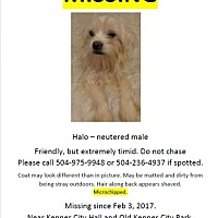 Adopt A Pet :: Halo - LOST! Please share! - Kenner, LA